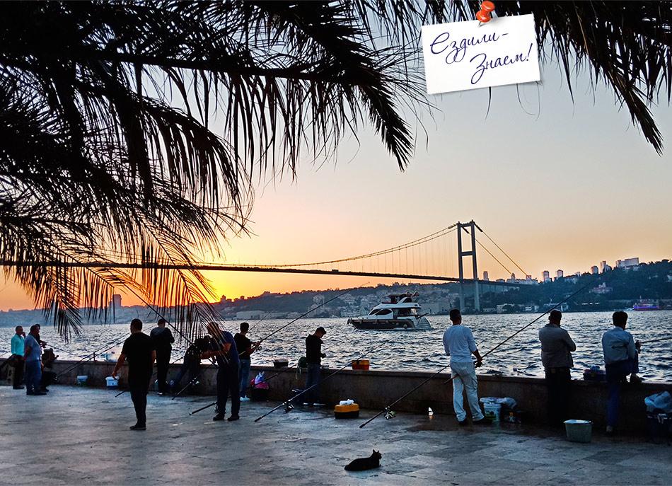 Рыбаки в Стамбуле и котик