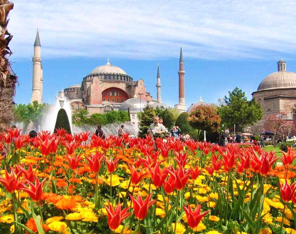 Тюльпаны в Стамбуле: парк Султанахмет перед Голубой мечетью