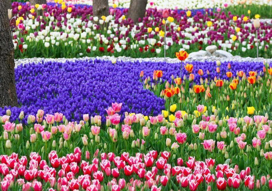 Праздник тюльпанов в парке Йылдыз (Yildiz)