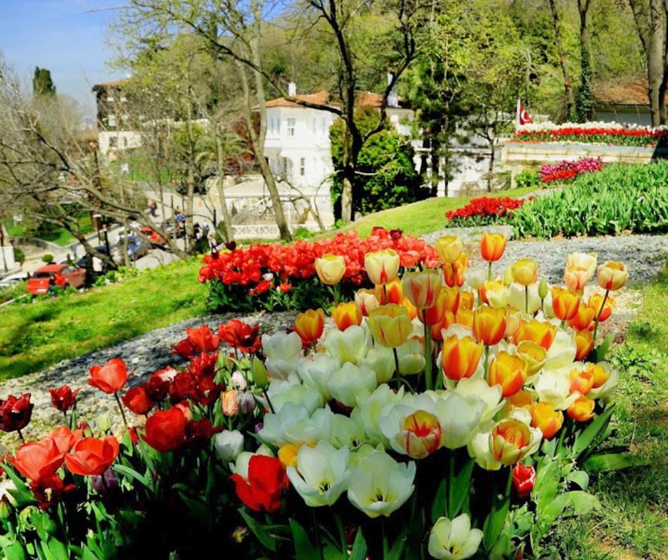 Стамбул в апреле: цветение тюльпанов в Fethipaşa Park