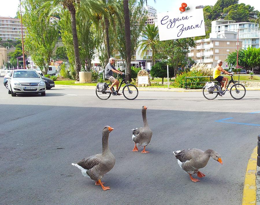 Гуляющие по городу гуси - еще одна запоминающаяся фишка Пенисколы
