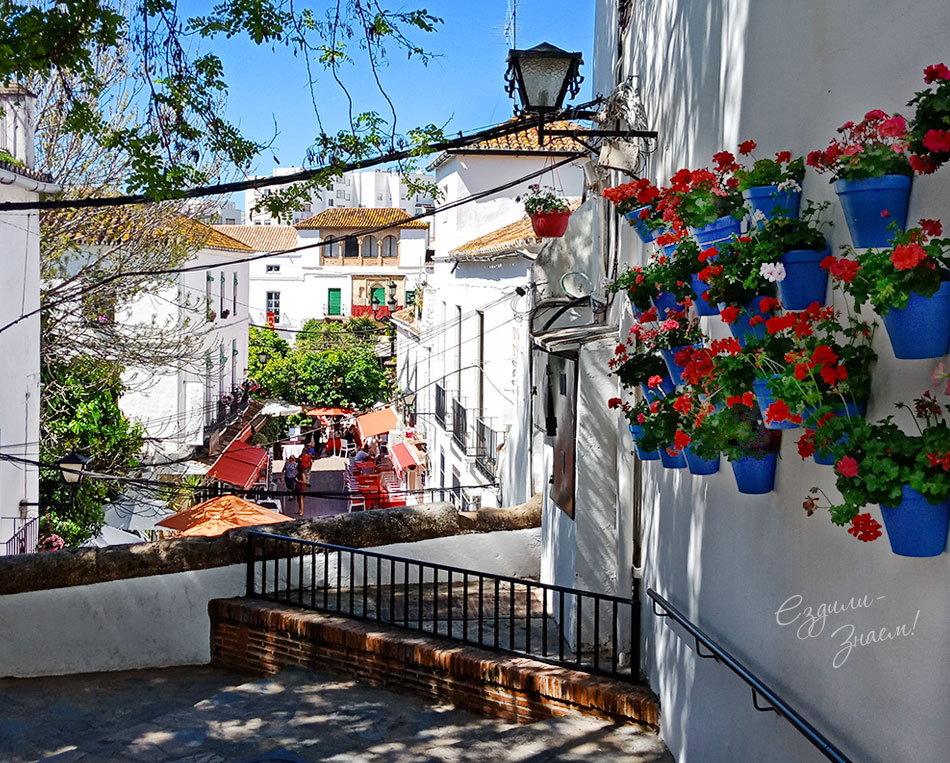 Цветы в горшках на стене дома