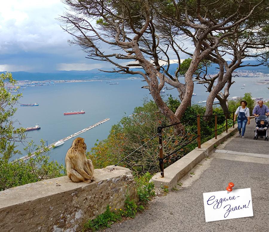 Обезьяны Гибралтара