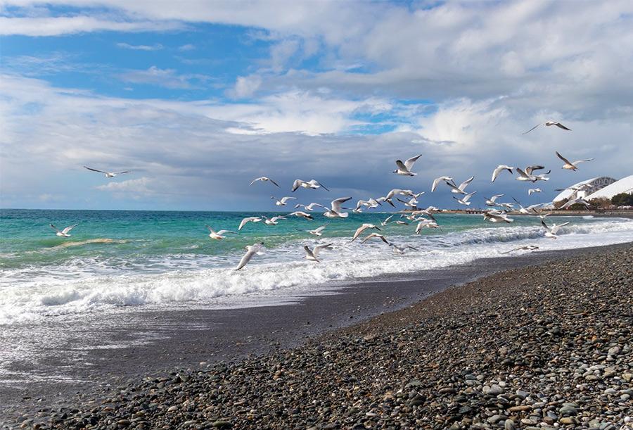 Зимнее море в Сочи