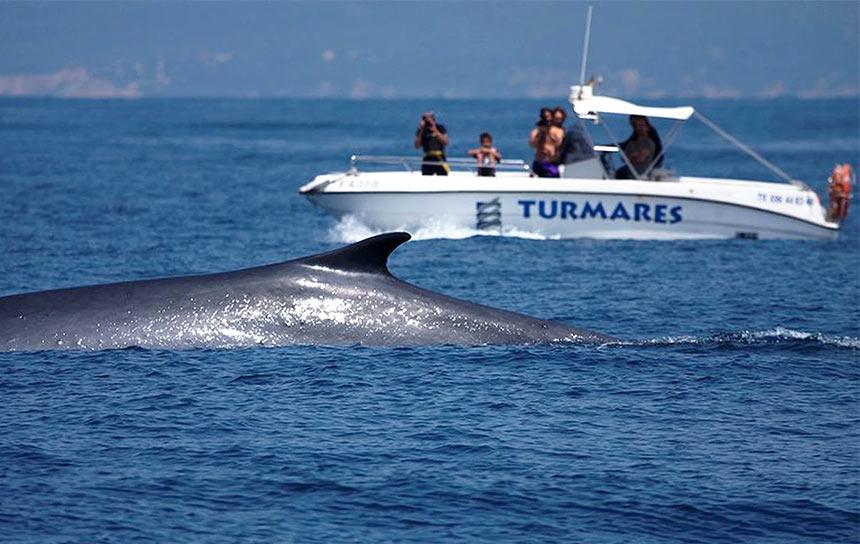 Дельфины в море в Тарифе