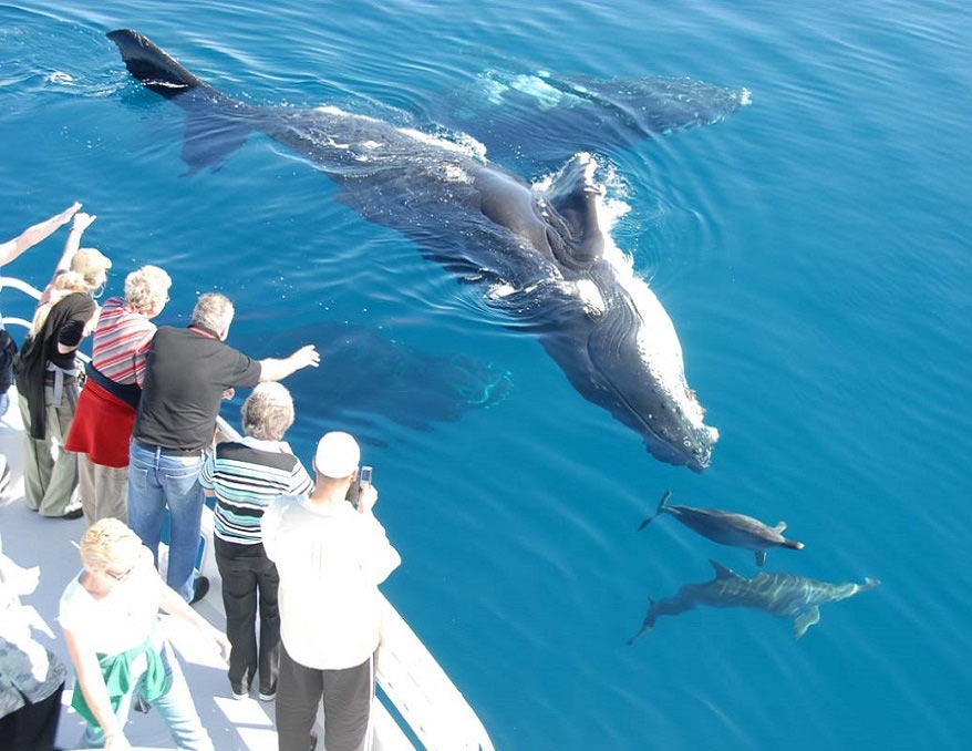 Туристы смотрят на касаток и дельфинов