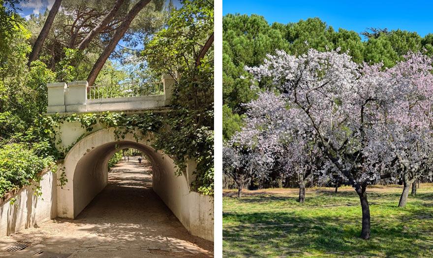 В парке Кинта-де-Лос-Молинос, Мадрид