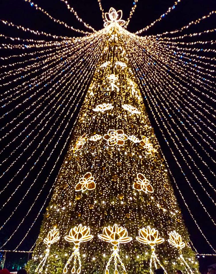 Новогодняя елка в Сочи
