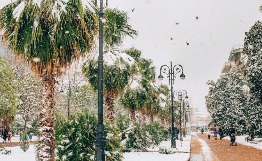 Зима в Сочи. Пальмы в снегу. Январь