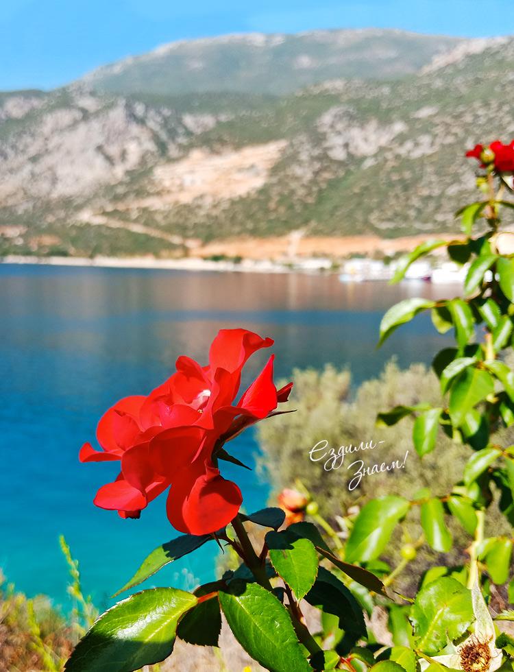 Розы и море в Каше