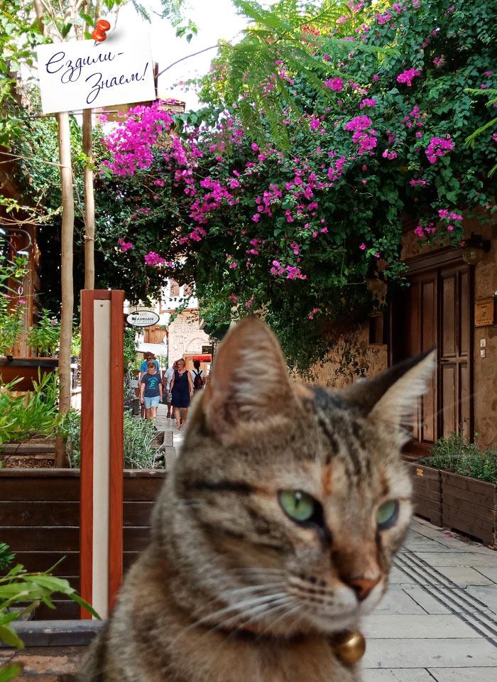 Турецкий котик в Анталье