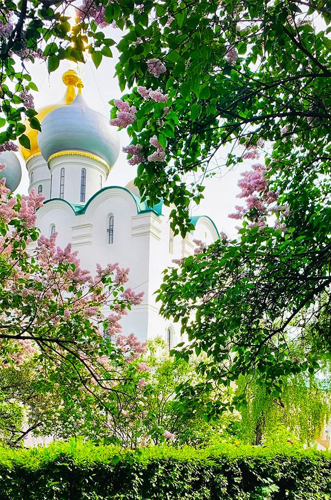 Новодевичий монастырь, май