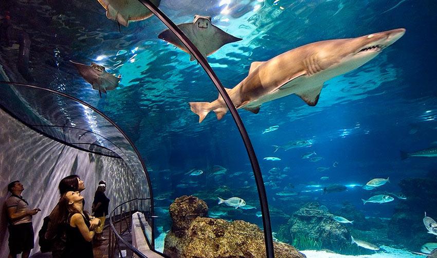 """Посетители океанариума """"Крокус-сити"""""""